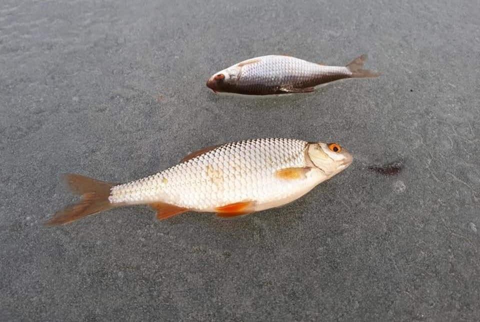 Лёд тонкий но рыбка клюет