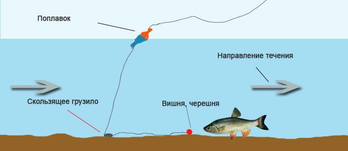 Ловля голавля в июне, июле. Рыбалка на вишню, черешню.