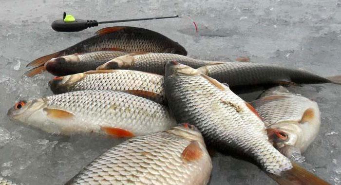 рыбалка на безмотылку в феврале