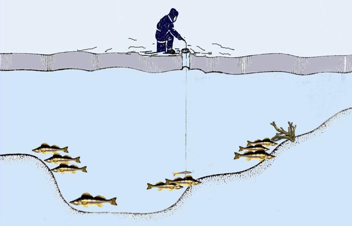 Рыбалка на судака зимой: все тонкости + видео со льда