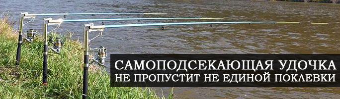 Подмосковье, Москва. ПРОГНОЗ КЛЕВА РЫБЫ
