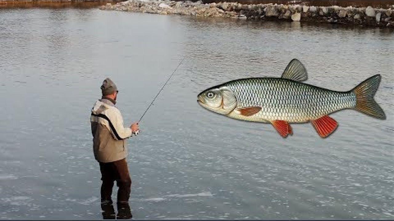 Рибалка зимою на спінінг. Ловля голавля (головеня) в лютому