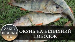 ОКУНЬ НА СПІНІНГ (ВІДВІДНИЙ ПОВОДОК, ВОБЛЕР). Рибалка на Дністрі спінінгом