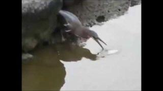 Рыбалка 100 уровня - птица рыболов, прикормка рулит
