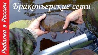 Браконьерские сети. Рыбалка на лесном озере. Линь отпущен )