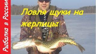 Зимняя рыбалка на жерлицы в марте. Ловля щуки на живца
