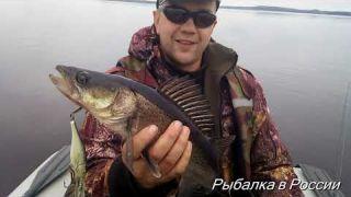 Рыбалка и отдых в Карелии. Ловля судака, окуня и щуки на троллинг