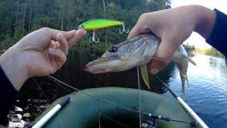 Разведка на новое озеро , воблер Jackall Squad minnow 95 , ловля щуки в октябре
