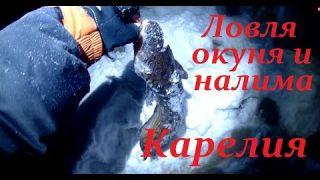 Рыбалка в Карелии. В поиске налима и килограммовых окуней. Ночная рыбалка.