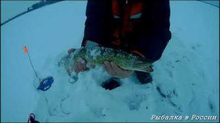 Блесним окуня. Ловля щуки на жерлицы. Зимняя рыбалка 2018-2019