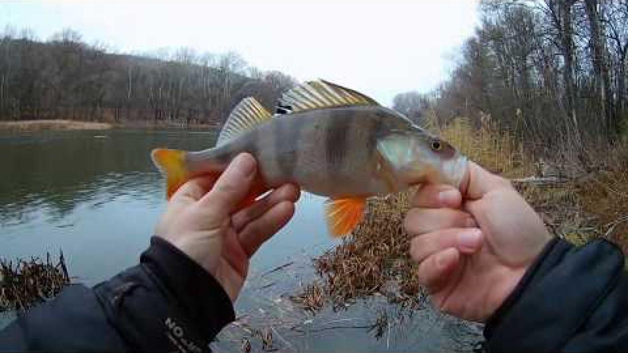 Ловля окуня осенью! Рыбалка в глухом коряжнике!
