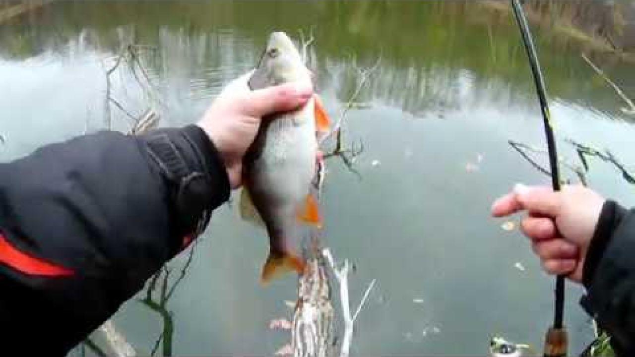 Ловля окуня в коряжнике! Рыбалка на Северском ДОНЦЕ. Ловля на ультралайт