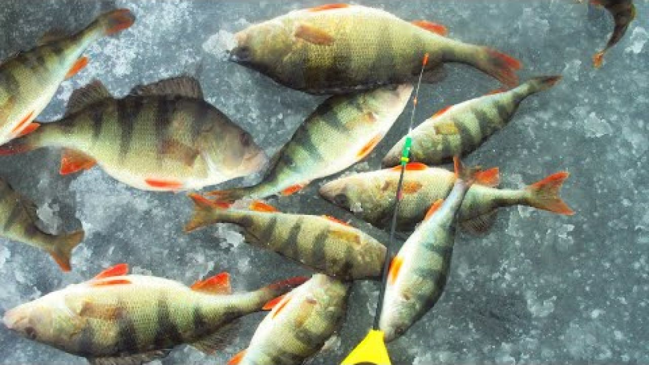 Первый лед 2019-2020! - Рыбалка 2019 -Ловля окуня на безмотылку