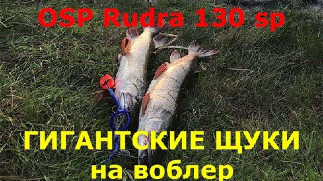 OSP RUDRA 130 SP ловит гигантских щук, как ловить щуку на спиннинг на воблер, рыбалка на воблер