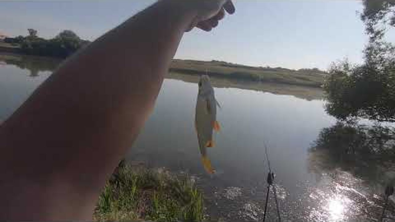 Пруд в Копаневке, поиск рыбы.